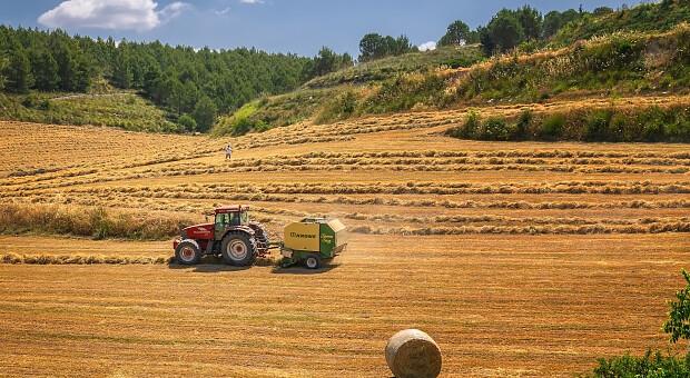 Ціна землі: вартість гектара під Києвом перевищила прайс у ЄС