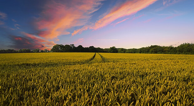В Украине ожидается рекордный урожай зерновых за всю историю