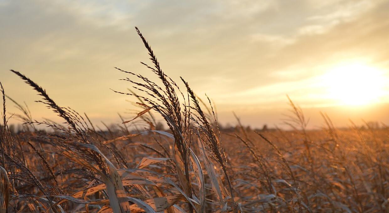 Високі ціни на російське зерно змушують покупців переключитися на пшеницю з України